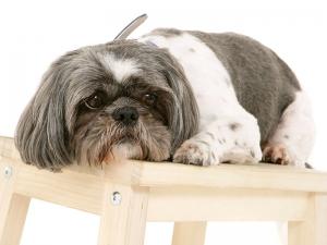 Elderly Dog Grooming